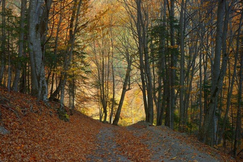 горы кавказ осень лес бук дорога Осенний буковый лес,Кавказphoto preview