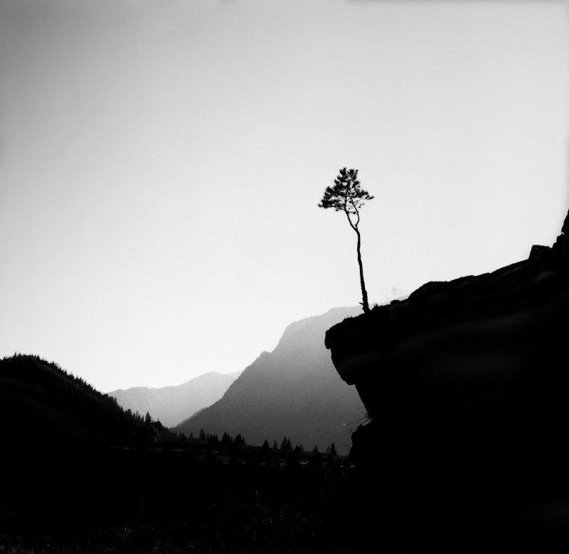 Сосна, дерево, скала, утёс, долина, горы, Алтай, Катунь Над долинойphoto preview