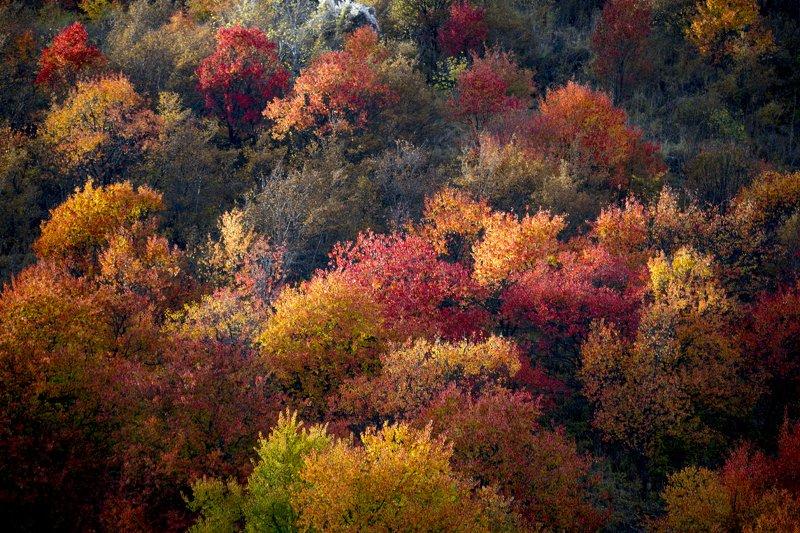 казахстан, тянь-шань, заилийский алатау, горы, осень, Осень в Северном Тянь-Шанеphoto preview