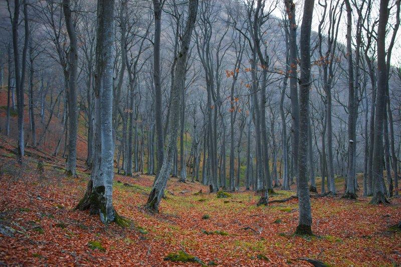осень,ноябрь,горный лес,пейзаж Серебряный лесphoto preview