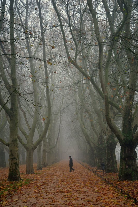 детектив walk autumn fall alley trees path road poland tree mist foggy morning детективphoto preview