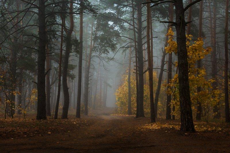 лес, осень, октябрь, туман, сырость Загадочеая грустьphoto preview