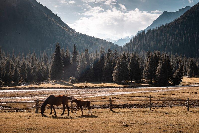 Терскей, горы, лошади В долине Чон-Кызыл-Суphoto preview