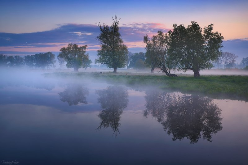 ner, morning, dawn, spring, fog, willow, trees, river, nature photo preview