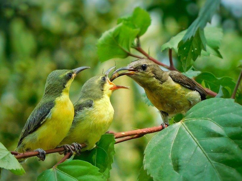#wildlife #birds #animals Feeding mechanism of purple sunbirdsphoto preview