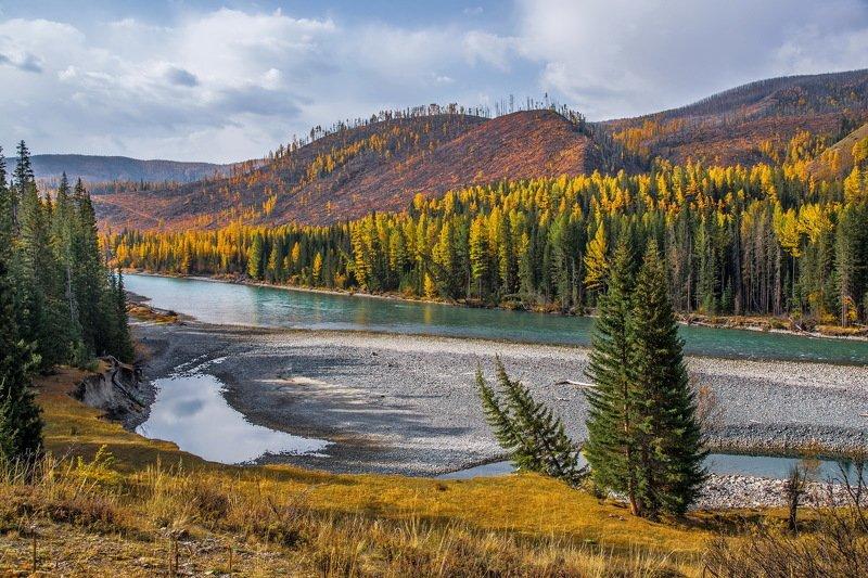горы. осень аргут. алтай. Осень на Аргуте.photo preview