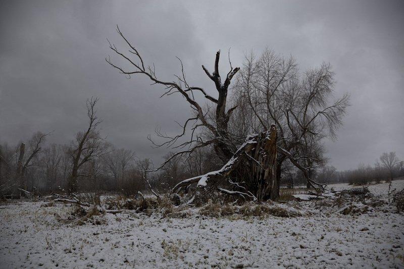 первый снег Ноябрьphoto preview
