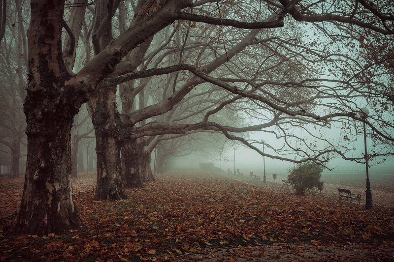 avenue of plane trees dranikowski road path autumn foggy morning mist magic fall Avenue of Plane Treesphoto preview