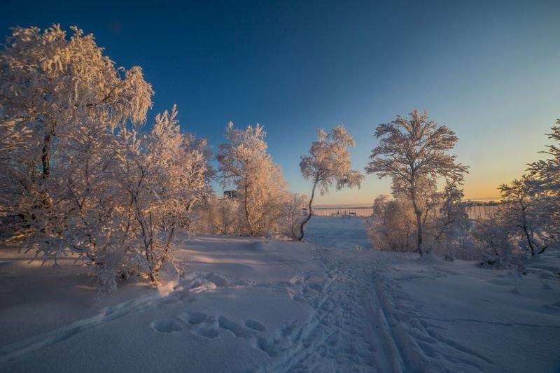 пейзаж, закат, солнце, зима, деревья, солнце, сугробы, снег «Нежные краски заката»photo preview