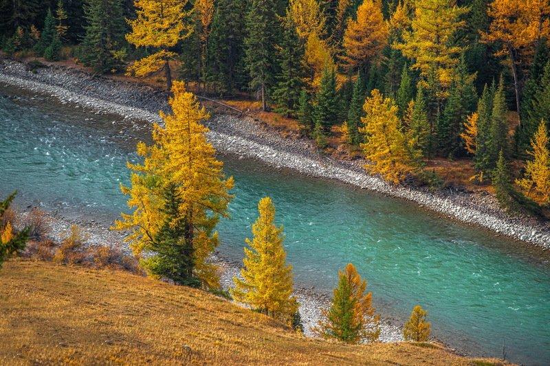 осень. алтай. горы. аргут. Кусочек Алтайской осени.photo preview