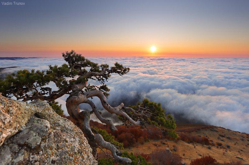 крым, долина привидений, демерджи Крымский бонсайphoto preview
