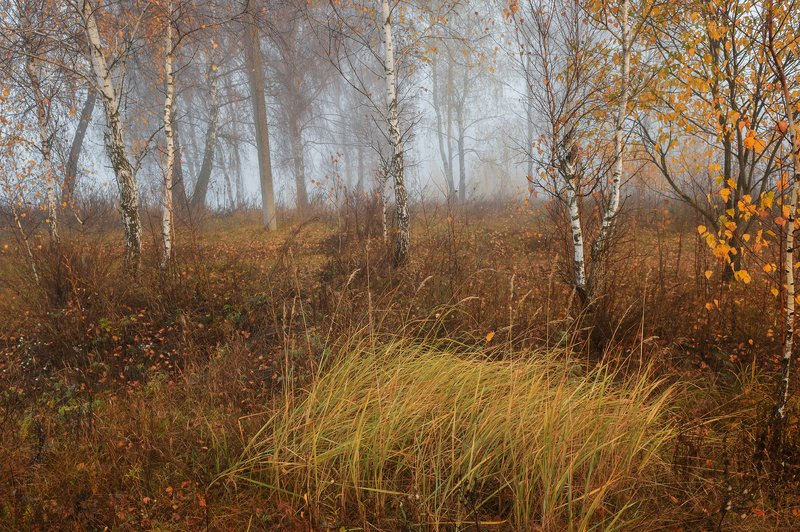 пейзаж,природа,россия,осень \
