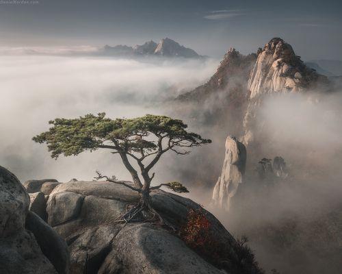 Корейский бонсай
