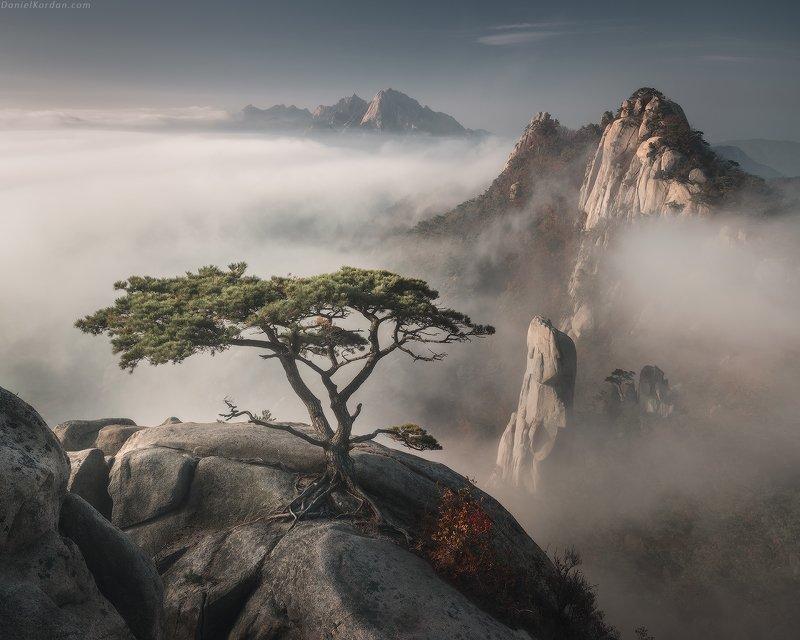 Корейский бонсайphoto preview