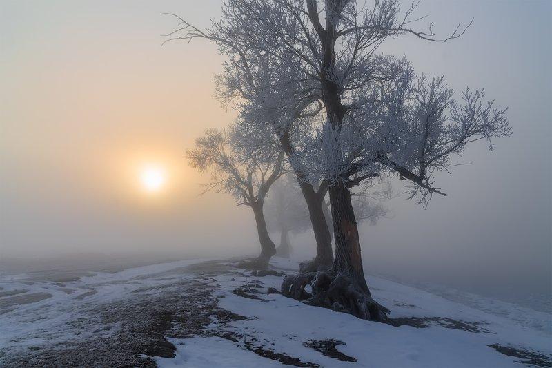 утро, рассвет, восход, туман, лучи Ноябрьphoto preview