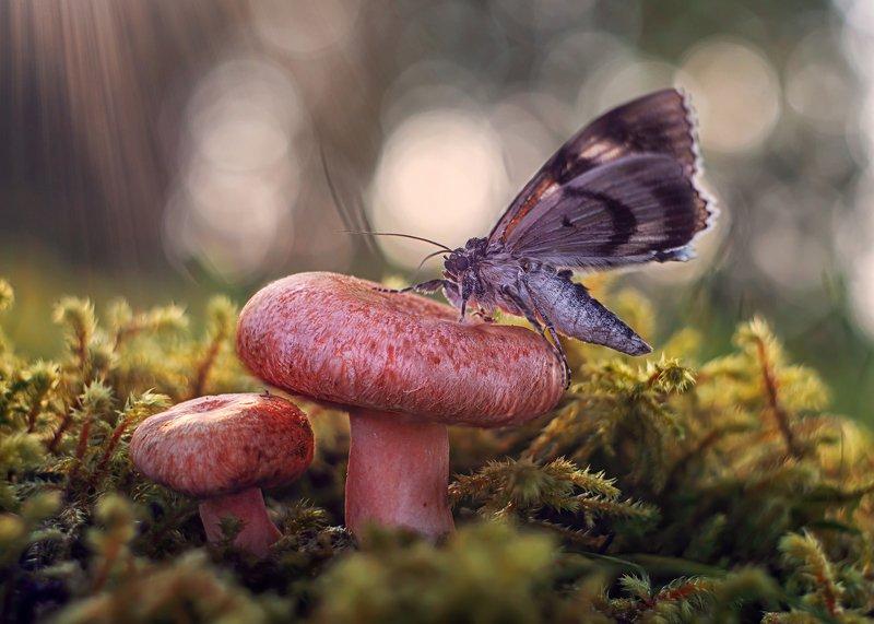 лес бабочка гриб боке природа луч мох взлет На взлет !photo preview