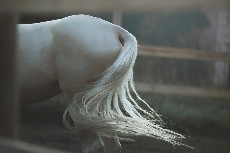 akhal-teke, horses unicorn tailphoto preview