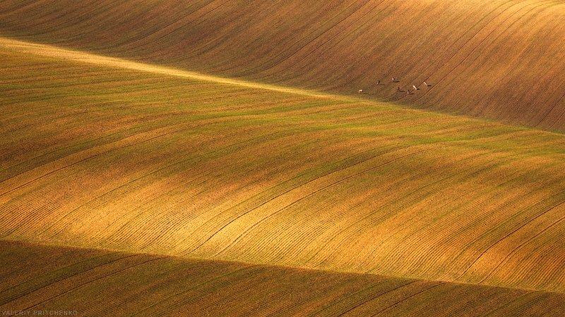 Моравия Чехия природа пейзаж Moravia На полях Южной Моравииphoto preview