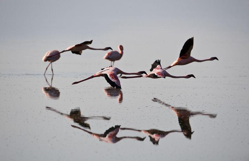 розовое, фламинго, найкуру Полет на евро.photo preview