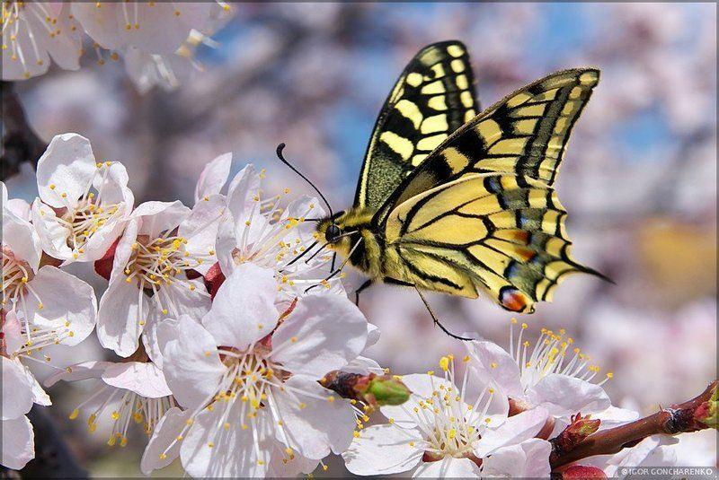 бабочка, макро, весна Гармонияphoto preview