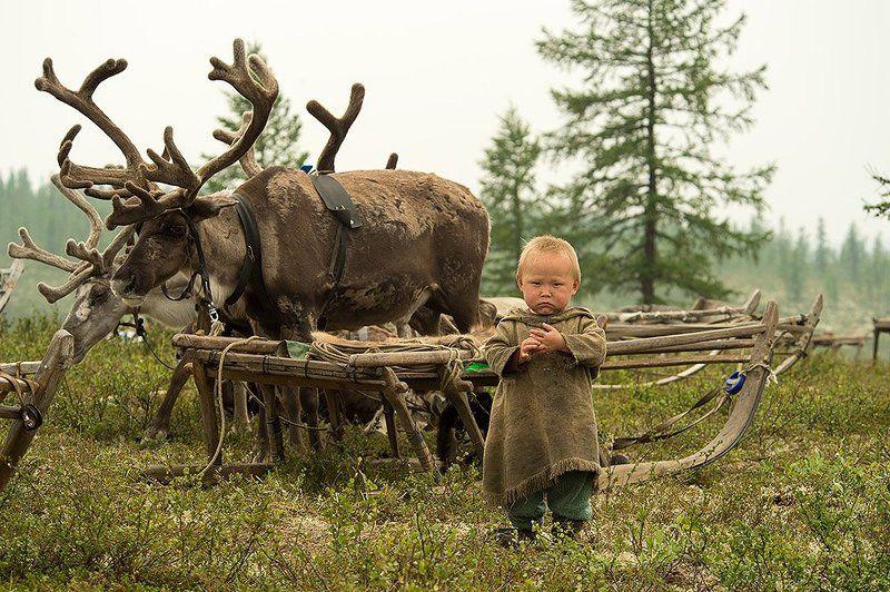 север, путешествия, стойбище, жизнь на краю земли, чумы, ненец, мальчик, олени юный оленеводphoto preview