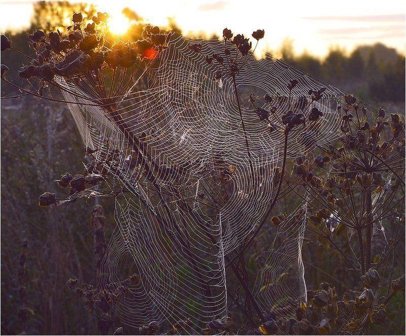 сеть для осени...photo preview