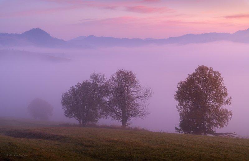 карпаты, осень, пейзаж, утро, рассвет, туман Лиловое утро...photo preview