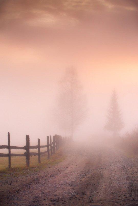 горы, дорога, карпаты, ноябрь, осень, рассвет, туман, украина, утро Ноябрьские лаконизмыphoto preview