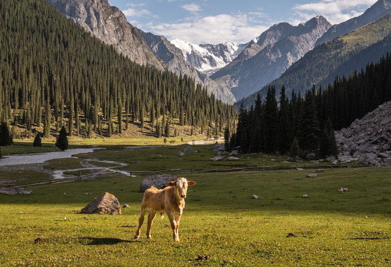 терскей, горы, чон-кызыл-су, Телёнокphoto preview