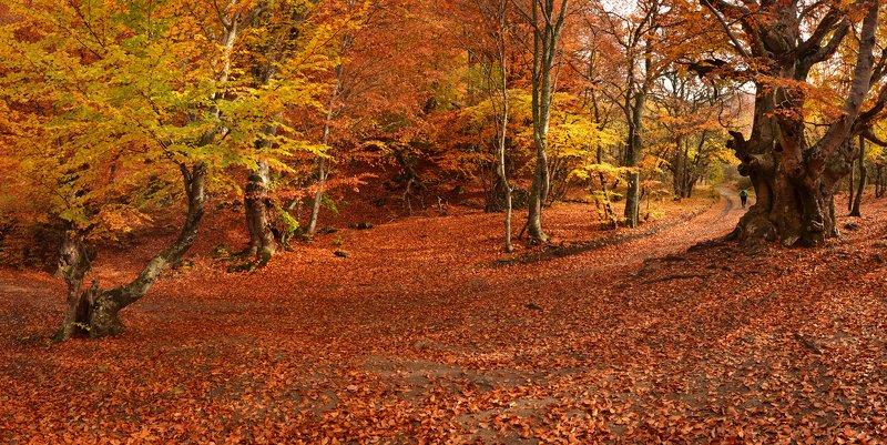 Осенняя дорога на Демирджиphoto preview