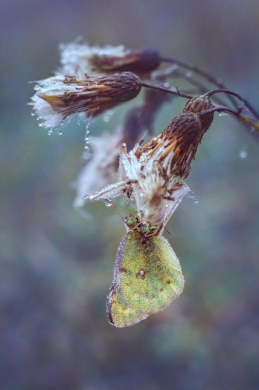 helios-44m-6, manual lens, мануальная оптика, beautiful, красивый, moment, момент, nature, природа, wildlife, живая, осенний, autumn, осень, butterfly, бабочка, droplets, капельки, fog, туман, В плену осеннего тумана…photo preview