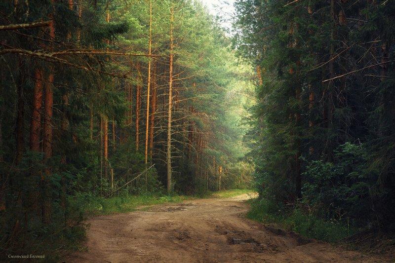 лес, бор, сосны, лето, дорога Лесная дорогаphoto preview