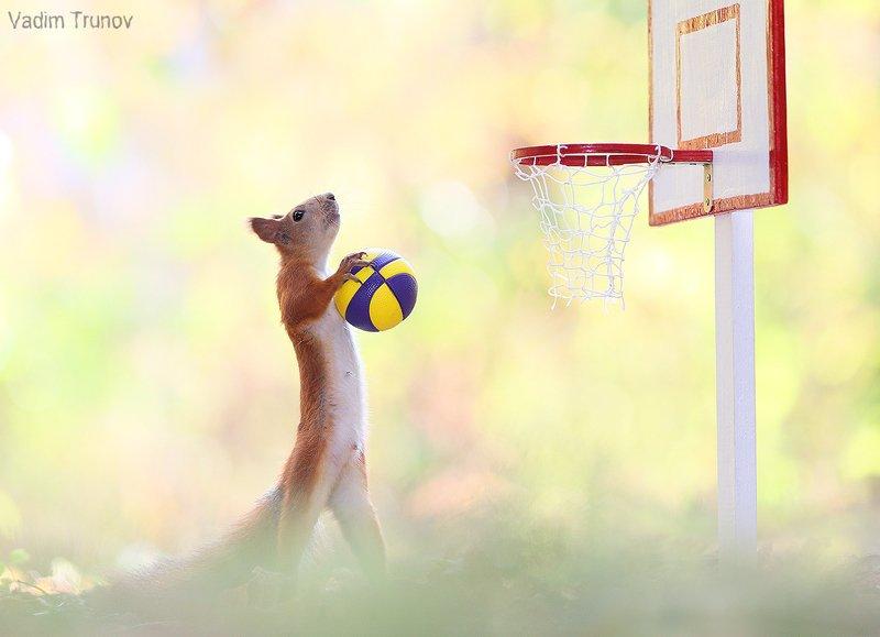 Баскетболphoto preview