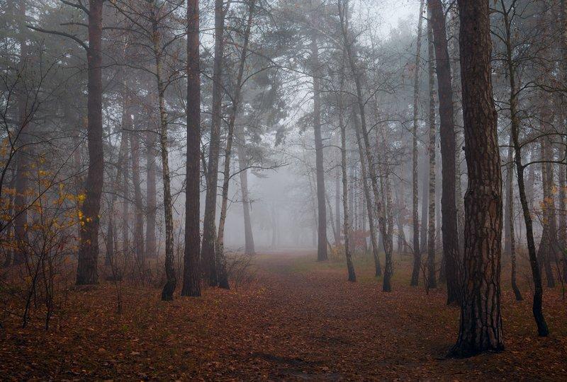 Скоро белый туман бросит капли росы...
