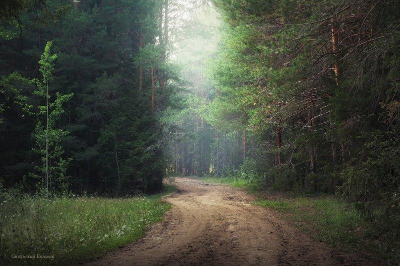 лес, бор, сосны, лето, дорога, туман, дымка В глубинах леса...photo preview