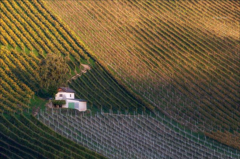 свет,österreich,осень,штирия,сарайчик,австрия,виноградники,gamlitz,sernau,landscape Pattern dei vignetiphoto preview