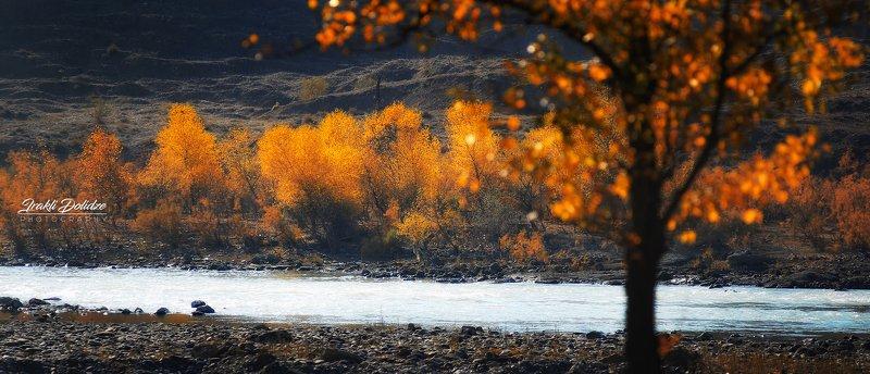 autumn, colors, leaves, bokeh, landscape, river, кавказ, природа, путешествия, пейзаж Late autumnphoto preview