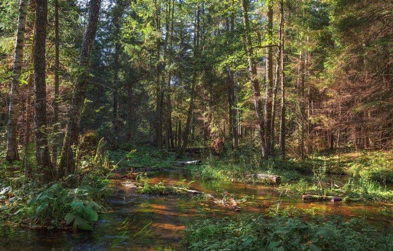 лето, утро, лес, Утро в лесуphoto preview