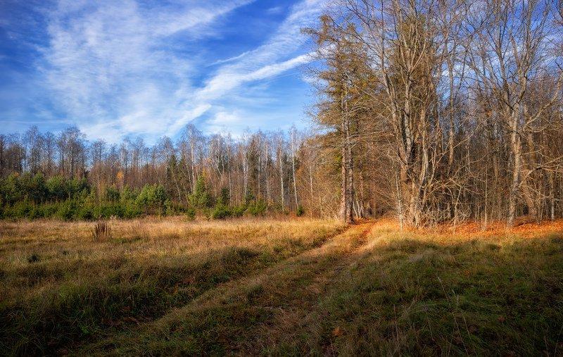 лес, осень, дорога, небо, Осенняя зарисовкаphoto preview