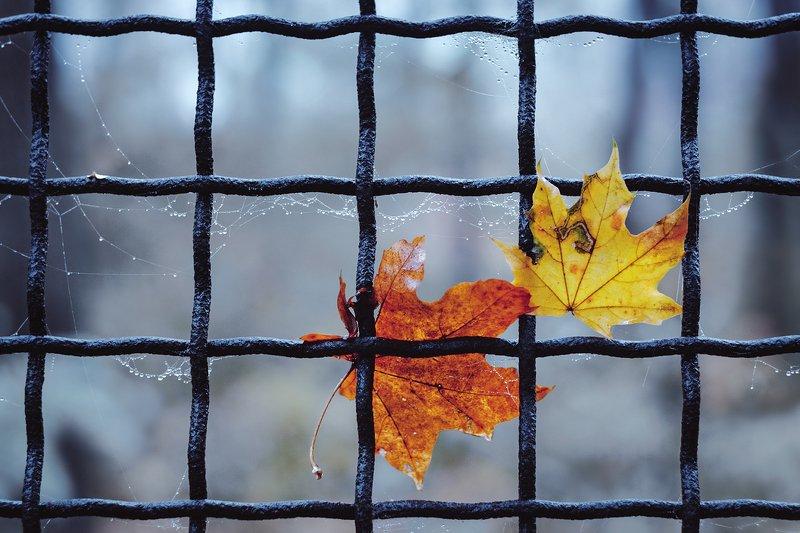 helios-44m-6, manual lens, мануальная оптика, beautiful, красивый, moment, момент, autumn, осень, осенние, leaves, листья, maple, кленовые, fog, туман, Узники.photo preview