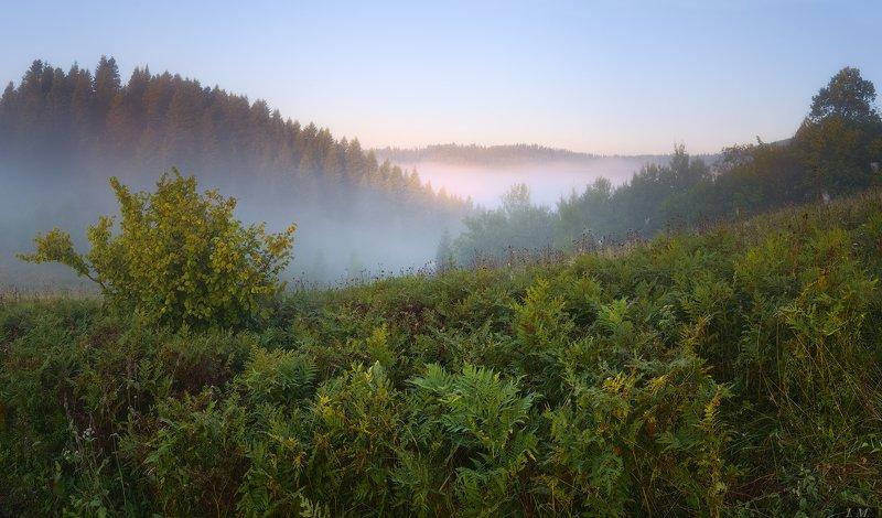 утро, туман, Карпаты, долина, лес, папоротник, сказка, рассвет, панорама, пейзаж, путешествие, свет, лето, morning, fog, Carpathians, valley, forest, fern, fairy tale, dawn, panorama, landscape, travel, light, summer, misty, foggy, dawn Сказочное утроphoto preview