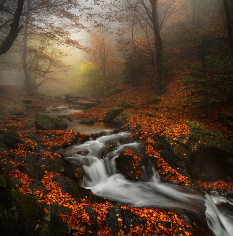 landscape nature scenery forest wood  autumn mist misty fog foggy rriver mountain staraplanina bulgaria туман лес Sunk in spellphoto preview