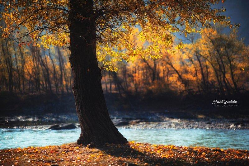 пейзаж, кавказ, природа, путешествия, осень, autumn, landscape, photography, outdoor, tree, colors, bokeh, river, walking, mountain Последняя осенняя мгновенияphoto preview