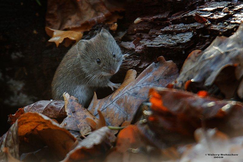 Горячие листья ноябряphoto preview