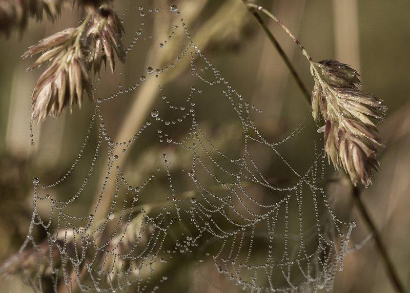 вологодская область,утро,паутина,роса,трава photo preview