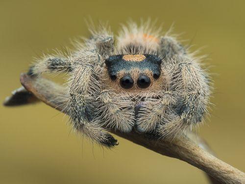 Spider 191122A