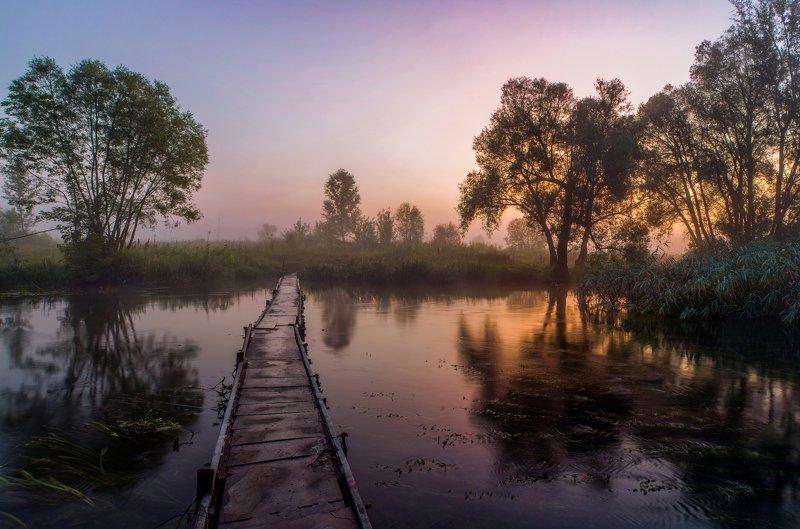 туман,рассвет,река нежеголь,мостик Летнее утро.photo preview