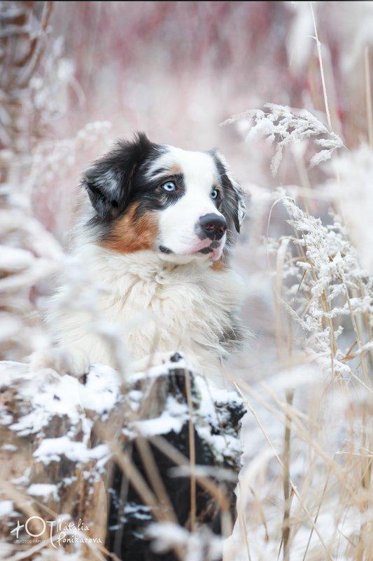 Почти зима....photo preview