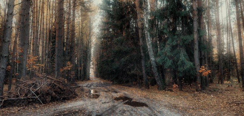 украина, коростышев, природа, лес, полесье, осень,  тишина, уединение, счастье, жизнь, воздух, чистый, вдохновение, деревья, просторы, фотограф, чорный, \