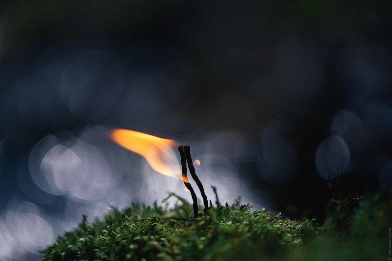 украина, коростышев, природа, лес, макро, макро истории, макро мир, макро красота, полесье, огонь, поцелуй, двое, мох,тишина, уединение, счастье, жизнь,  вдохновение, фотограф, чорный, \
